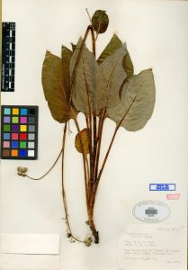 dried leaves on paper with color chart.