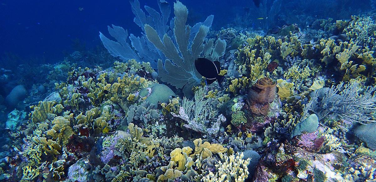 Underwater coral.
