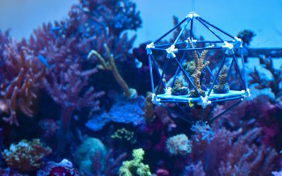 Biologists Devise Arks to Save Coral Reefs